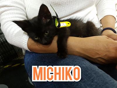 Foto Mascota