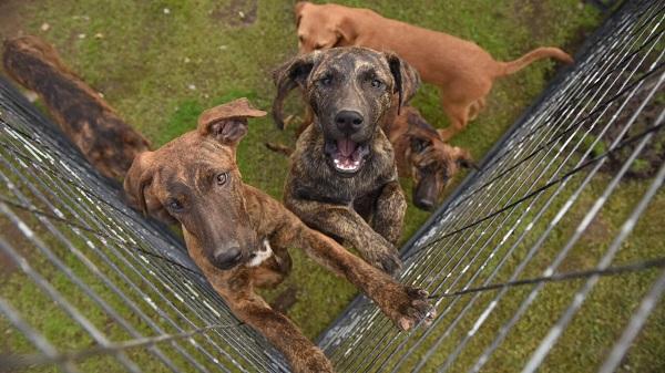 Algunos de los perritos que están para adoptar.