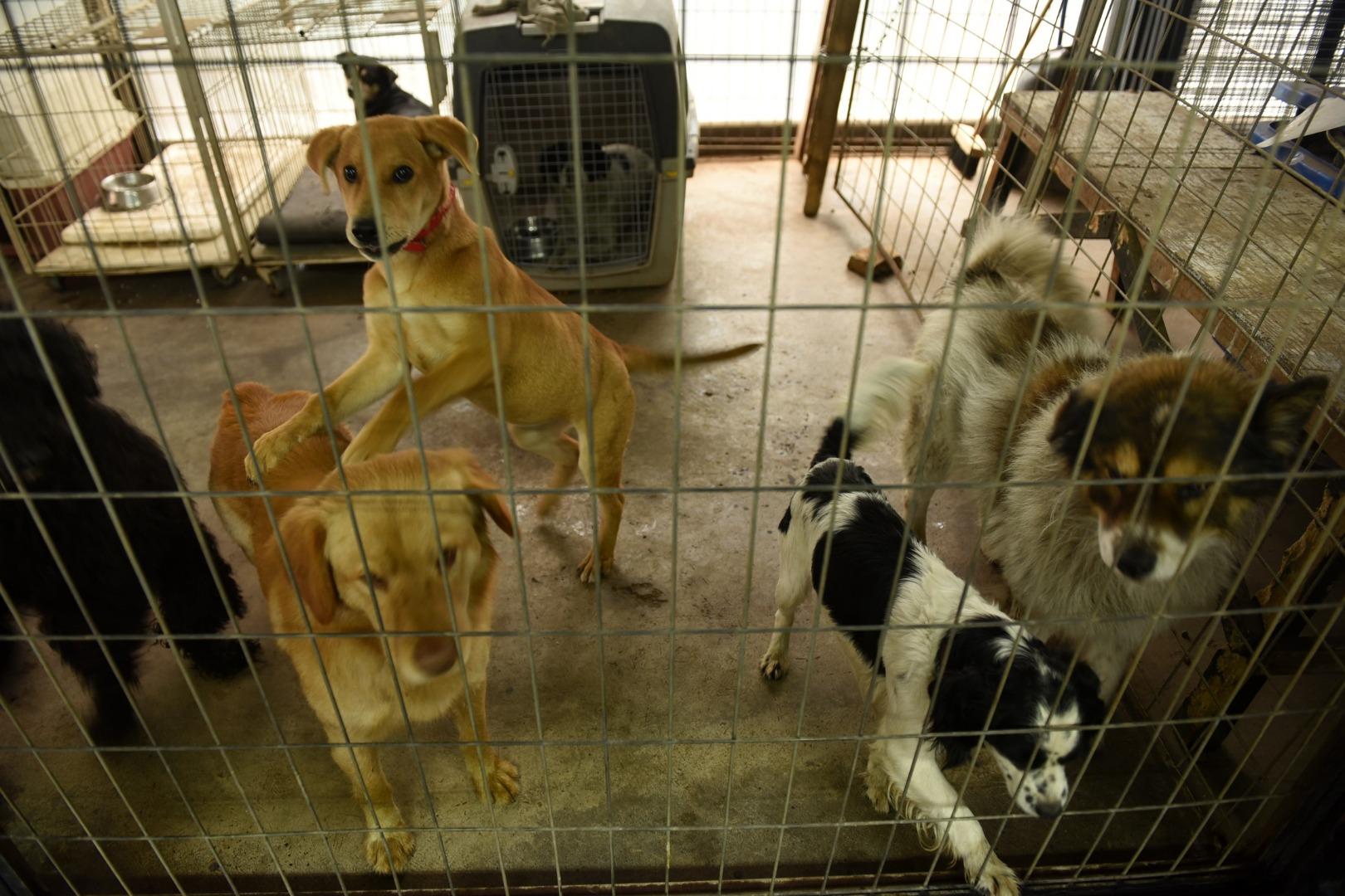 Perros acogidos durante el fin de semana que esperan una familia