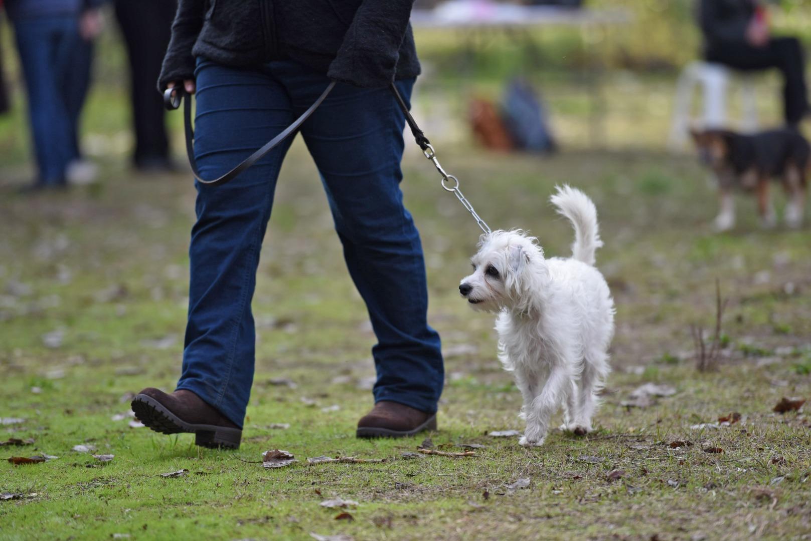 Cursos adiestramiento canino 2019