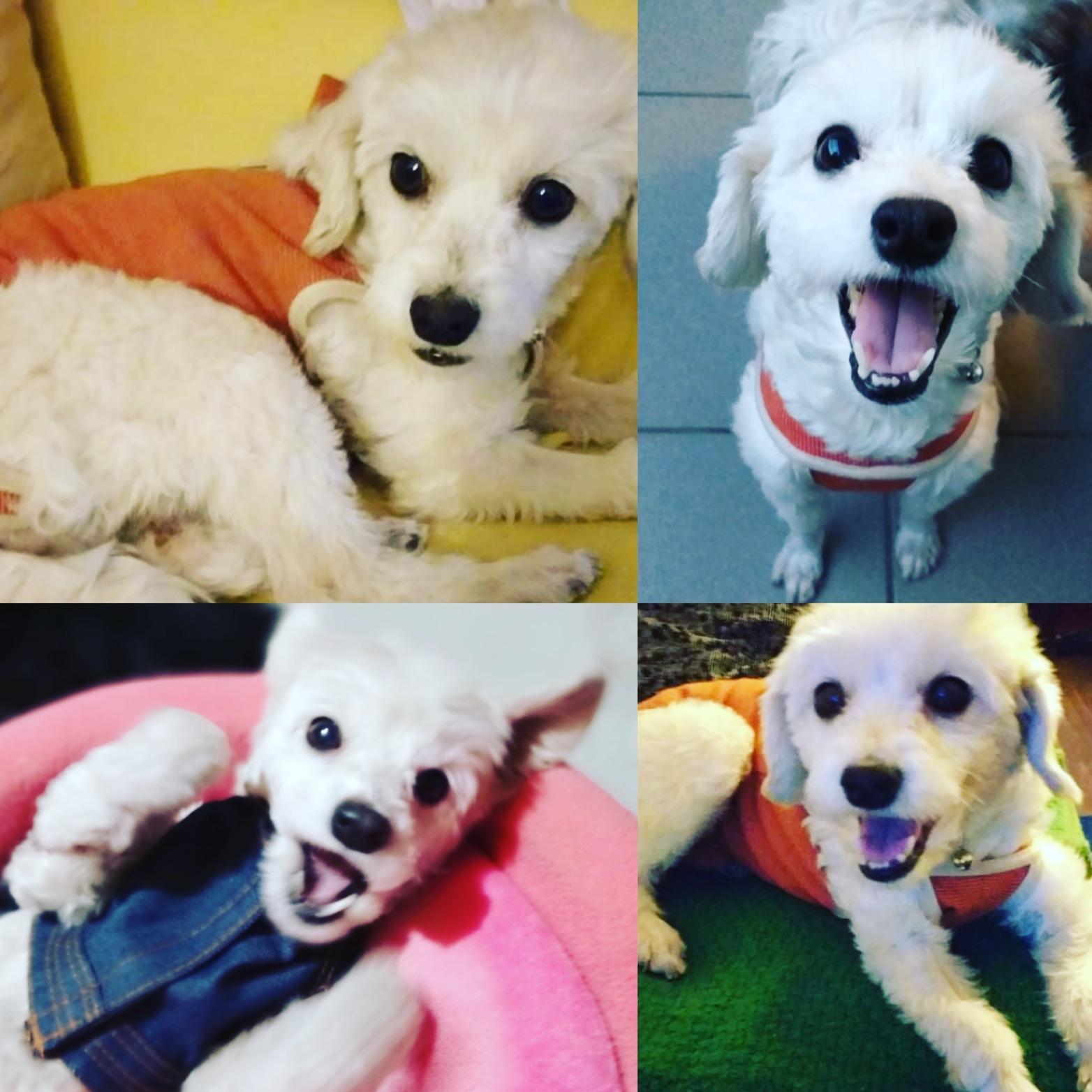 Adoptar Mascota - Mascotas - Las Condes